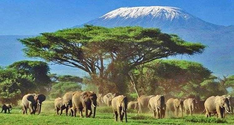 Kenya Safari si sejur la Oceanul Indian
